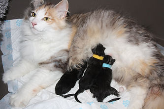 Nessi & Jack Babies