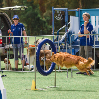 Agility at Pawsitive Steps 2019