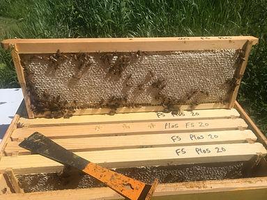 honey frame.jpg