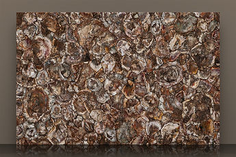 prexury petrified wood polished semi-precious slab