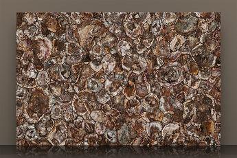 Prexury Petrified Wood Polished Semi-precious Slab