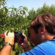 Barry filming peaches.jpg