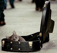 tip cat.jpg