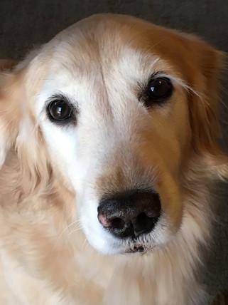 Zoe (RIP)