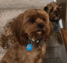 Joey & Frankie