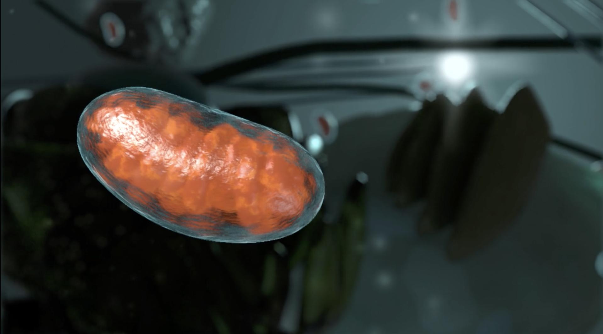 Molecular Environment