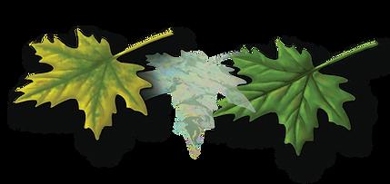 leaves-magic-green-2.png