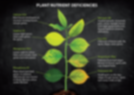 Plant Nutrient Deficiencies.png