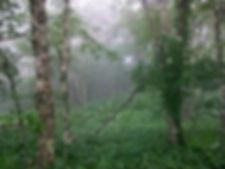 timbe_trees.jpg