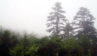 akkeshi_trees.jpg