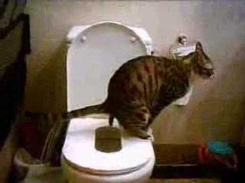 cat litter training
