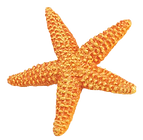 Our star fish logo - contact us about pet friendly Beach Affair located at Marcus Beach on the Sunshine Coast in Queensland for your next family holiday.