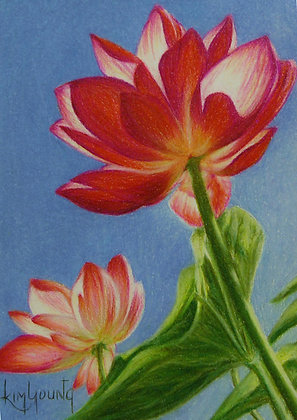 Sunlit Water Lilies