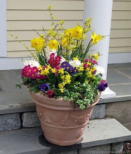 spring forsythia.jpg