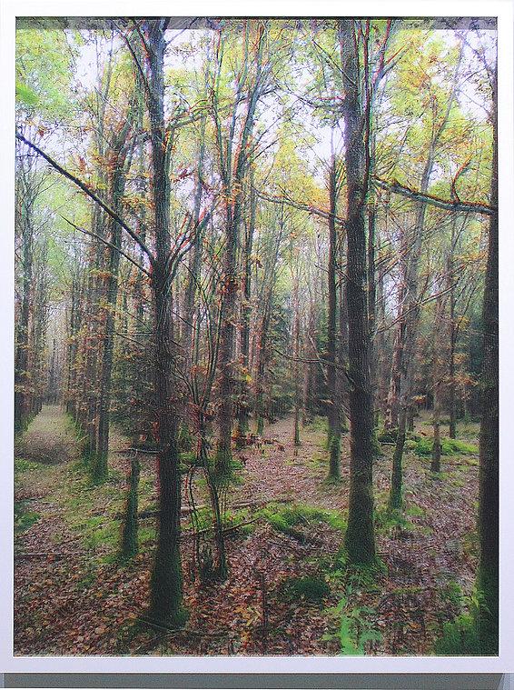 phraming Wald