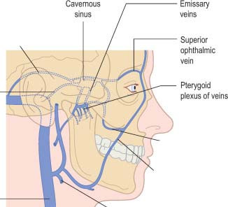 Pterygoid plexus of veins is also present in the Infratemporal fossa. Pteryoid plexus connects with Cavernous sinus via Emissary Veins.