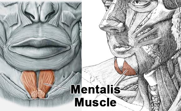 Mentalis Muscle