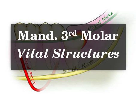 Vital Structures around Mandibular Third molar