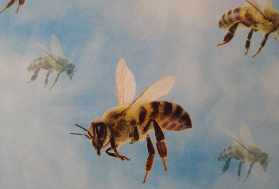 BEES  -  COTTON JERSEY