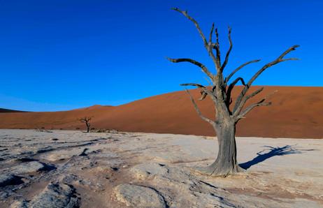 _Y5A1864 Dead Vlei lone tree web ready.j