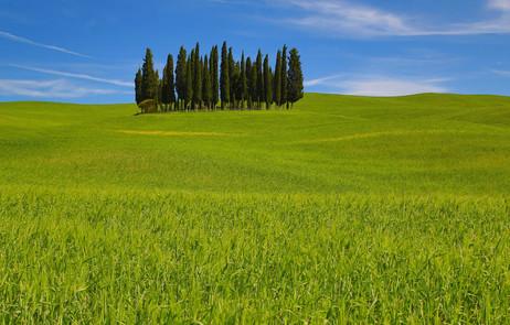 NE7A3977 Tuscan Cypress1 web ready.jpg