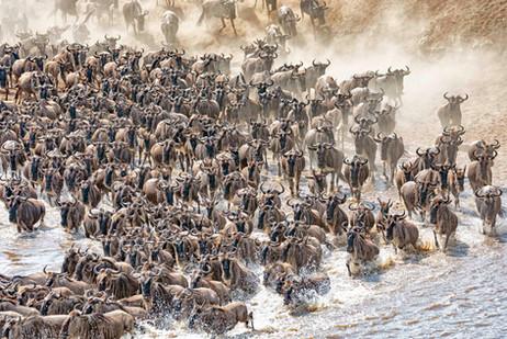 Migration corssing