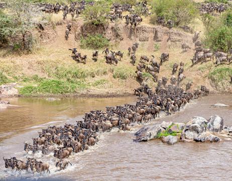 Migration crossing