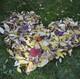 leaves-1025495_1920.jpg