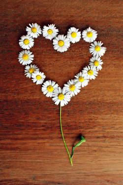 daisy-1403132_1920