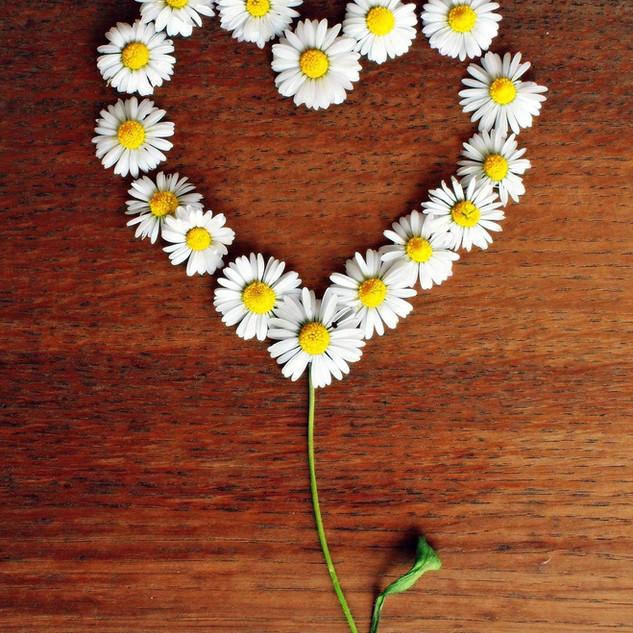 daisy-1403132_1920.jpg