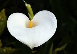 flower-989297_1920
