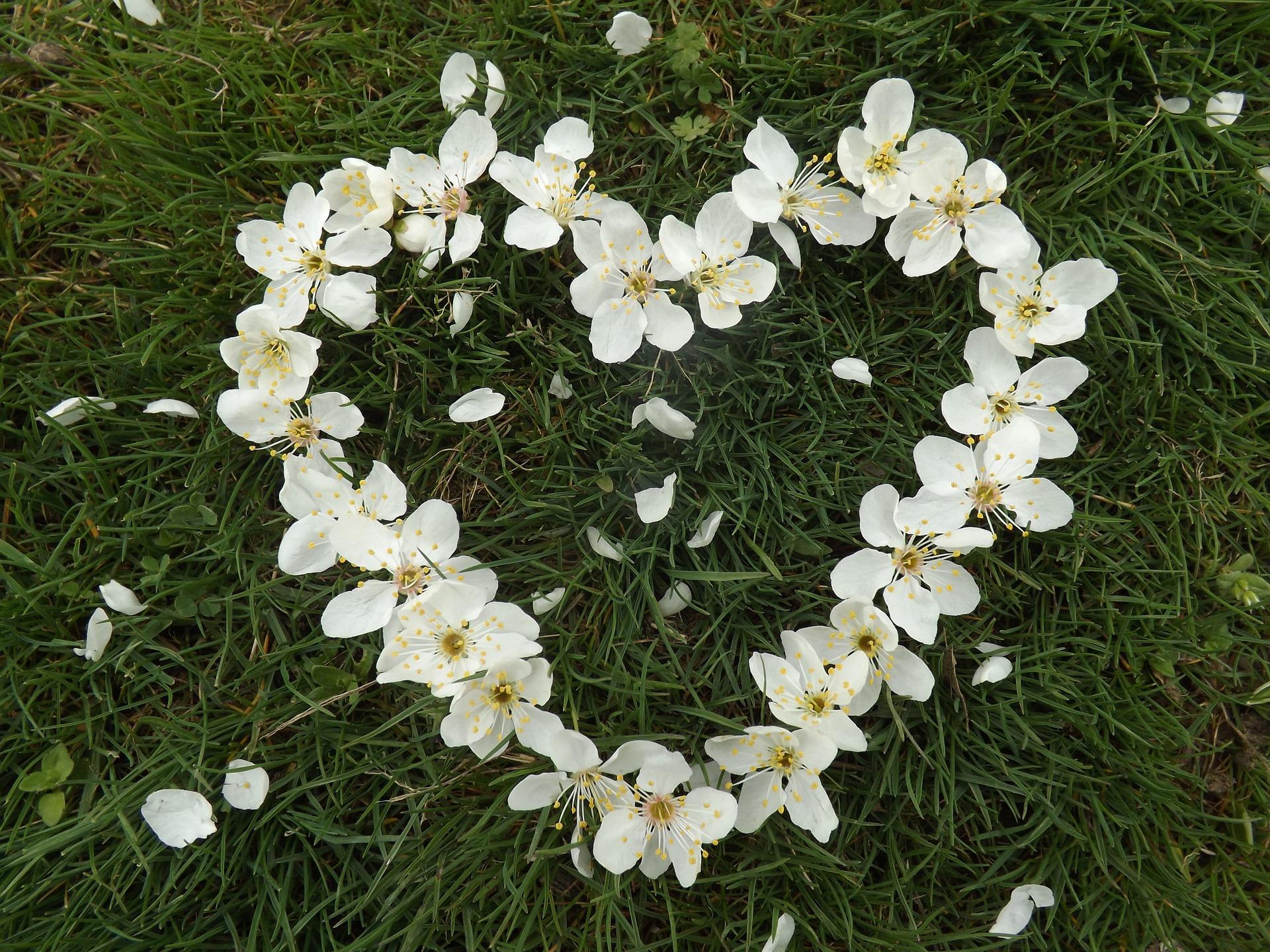 heart-1254343_1920