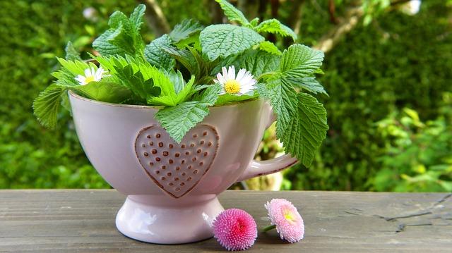 herbs-2232640_640