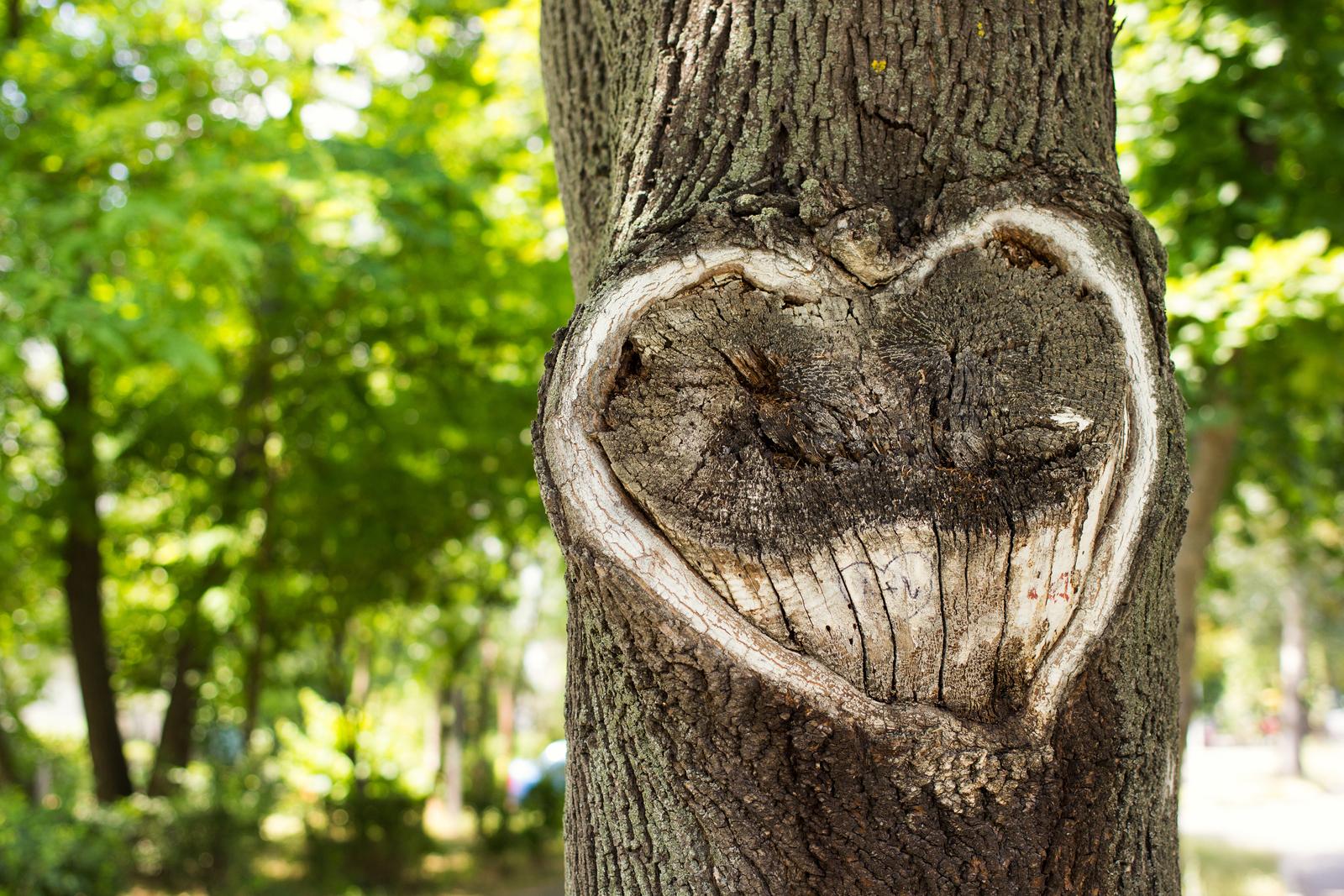 Heart-Tree-68375641