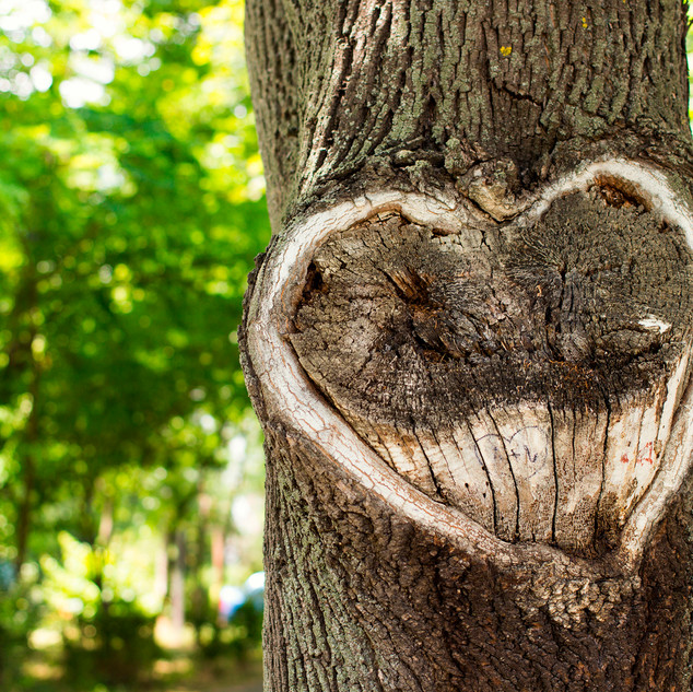 Heart-Tree-68375641.jpg