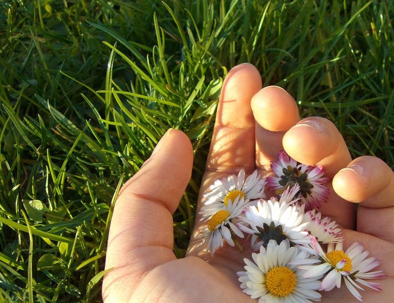 hof_flowerhands