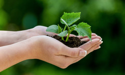 Plant-in-Hand_1386319530522241