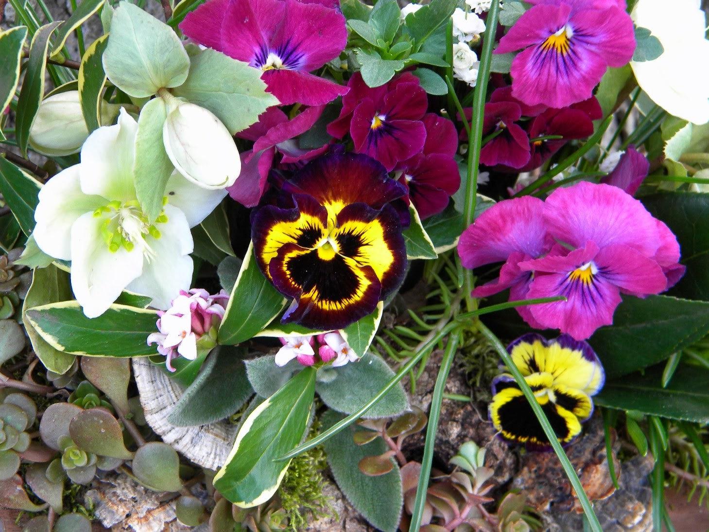 Set up your winter garden