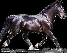 Purina_Horse_LifeStage_ActivePleasure.pn
