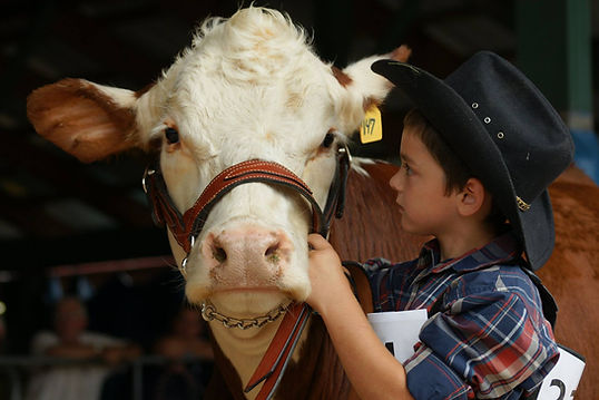A boy and his cow