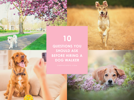 The 10 Best Questions to Ask Your Dog Walker