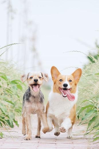 dogs2.jfif