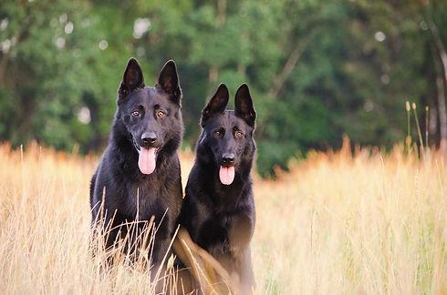 dogs 4.jfif