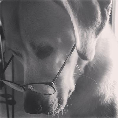 Sadye's dog, Panda Joe Funny Shorts, who wears Sadye's glasses as an homage to her anonymity