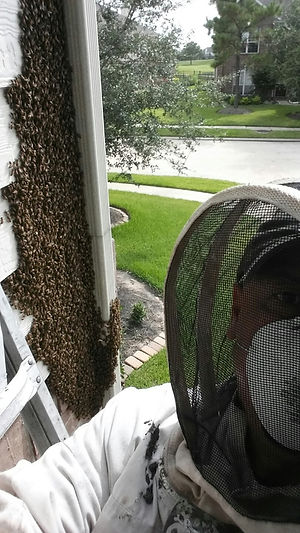 911 Honey Bee Removal