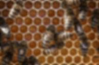 honey-3216984_1920.jpg
