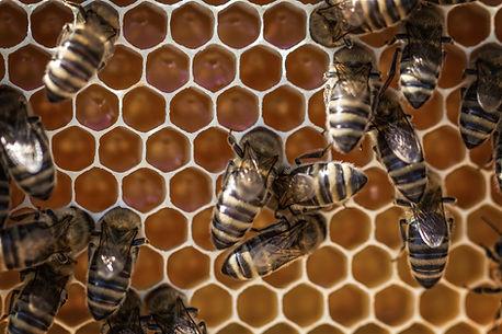 Beehive Removal Richmond Tx