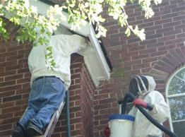 Live Honey Bee Removal 2 story soffit