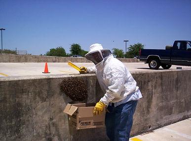 Bee Swarm Rmoval San Antonio Tx