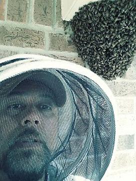 Bee Swarm on Wall.jpg